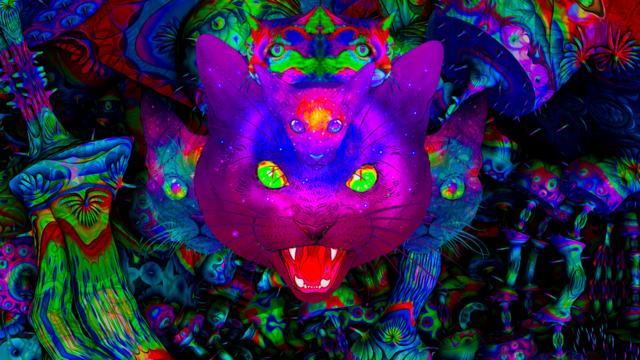 Psy Cat w/ DJ Finch & S.K & El Flitzo 13 Sep '19, 23:00