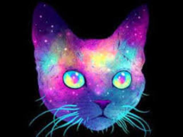 Psy Cat 13 Dec '19, 23:00