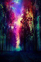 Party Flyer Vibration des Waldes 4 Aug '18, 20:00