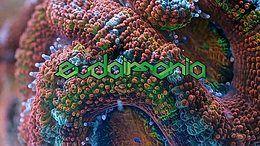 Party Flyer EUDAIMONIA pres: Lunatica & Tropical Bleyage 7 Dec '18, 22:00