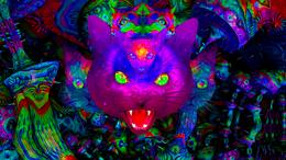 Party Flyer PSY CAT - High Roller / StörKlänge / Hair Cutter 12 Apr '19, 23:00